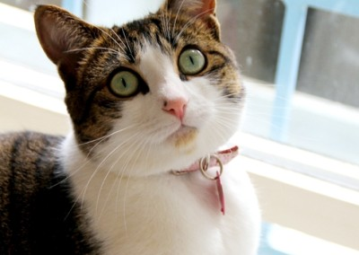 Muesli showing off her beautiful green eyes with black eyeliner - and little pink nose!