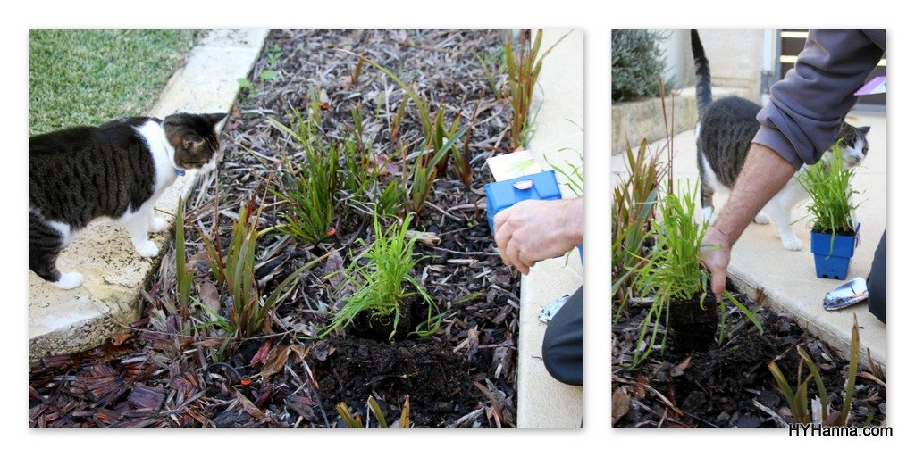muesli-pet-grass-everlasting-daisies
