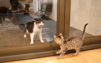 Muesli's Corner: A Kitty Playdate Disaster!